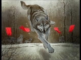 Смотреть охота на волка ночью в засидке видео бесплатно